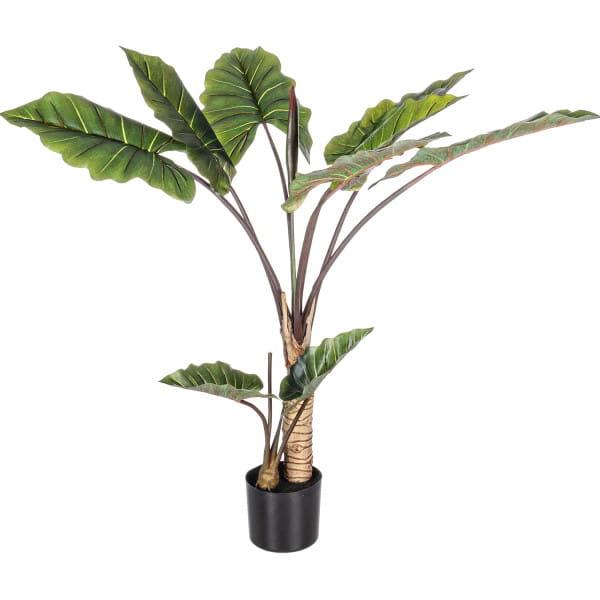 Pflanze Dieffenbachia mit Vase 10 Blätter