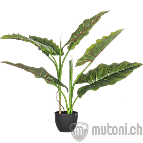 Pflanze Dieffenbachia mit Vase 7 Blätter